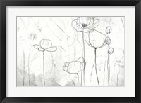 Framed Poppy Sketches II