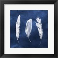 Framed Cyanotype Feathers II