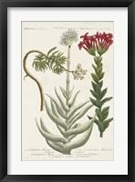 Framed Botanical Varieties I