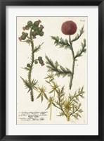 Framed Botanical Varieties II