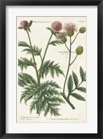 Framed Botanical Varieties III