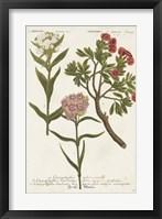 Framed Botanical Varieties IV