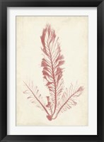 Framed Coral Sea Feather I