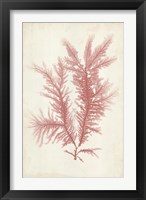 Framed Coral Sea Feather II