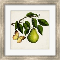 Framed Fruit with Butterflies I