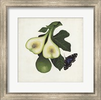 Framed Fruit with Butterflies III