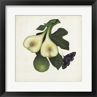 Framed Fruit with Butterflies III