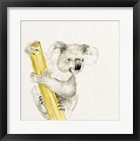 Framed Baby Koala II