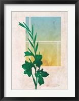 Framed Ombre Gladiolus Flowers