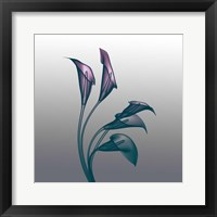 Framed Ombre Calla Lilies X-Ray