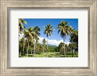 Framed Golf course, Taveuni Estates, Fiji