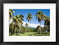 Framed Golf course, Taveuni Estates, Fiji