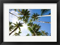 Framed Coconut palm grove, Lavena Village, Taveuni, Fiji