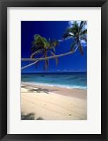 Framed Kadavu in Fiji