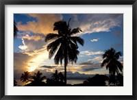 Framed Palm Silhouettes at Sunset, Taveuni,  Fiji