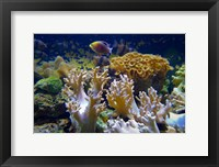 Framed Salt Water Aquarium, Fiji