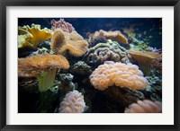 Framed Salt Water Aquarium, Vitu Levu, Fiji