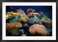 Framed Salt Water Aquarium in Vitu Levu, Fiji
