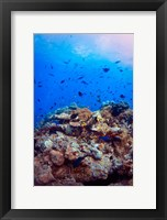 Framed Scuba diving in Fiji