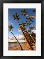 Framed Coral Coast, Viti Levu, Fiji