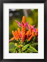 Framed Flower, Fiji