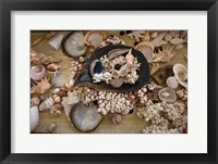 Framed Sea Shells, Fiji