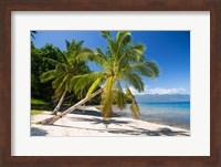 Framed Beach & Palms, Waitatavi Bay, Fiji