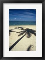 Framed Shadow of Palm Trees on Beach, Coral Coast, Fiji