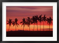 Framed Palm Trees and Sunset, Queens Road, Fiji