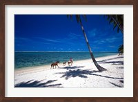 Framed Horses on Beach, Tambua Sands Resort, Coral Coast, Fiji