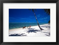 Framed Horses on Beach, Tambua Sands Resort, Coral Coast, Fiji