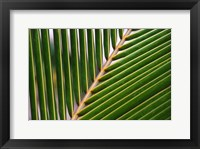Framed Palm, Fiji
