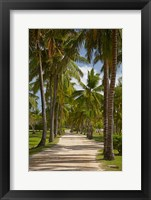 Framed Avenue of Palms, Musket Cove Island Resort, Malolo Lailai Island, Mamanuca Islands, Fiji
