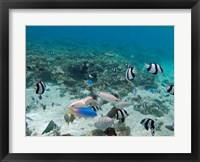 Framed Tropical Fish, Malolo Lailai Island, Fiji