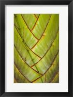 Framed Palm flora, Coral Coast, Viti Levu, Fiji