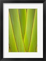 Framed Palm frond pattern, Coral Coast, Viti Levu, Fiji