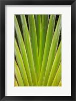 Framed Palm frond pattern, Fiji