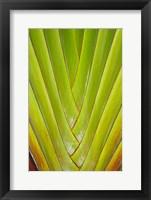 Framed Palm frond pattern, Coral Coast,  Fiji