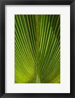 Framed Palm frond, Nadi, Viti Levu, Fiji