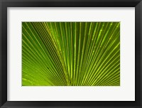 Framed Palm frond, Fiji