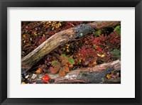 Framed Oak-Hickory Forest, Kent, Connecticut
