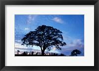 Framed Oak Trees at Sunset on Twin Oaks Farm, Connecticut