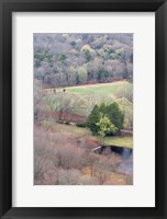 Framed Spring Forest in East Haddam, Connecticut