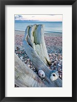 Framed Driftwood on the shell-covered Long Beach in Stratford, Connecticut