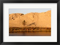 Framed Palm Tree on the Bank of the Nile River, Egypt
