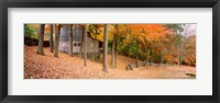 Framed Trees On A Hill, Connecticut