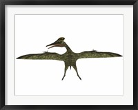 Framed Flying Pterodactylus