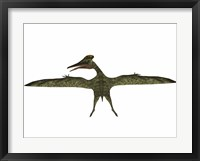 Framed Flying Pterodactylus