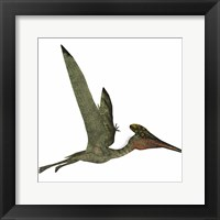Framed Pterodactylus Flying Reptile