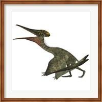 Framed Flying Pterodactylus  Reptile